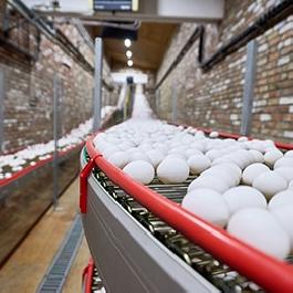 Egg Conveyor Chains